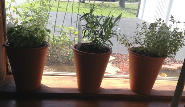 aldi-herbs