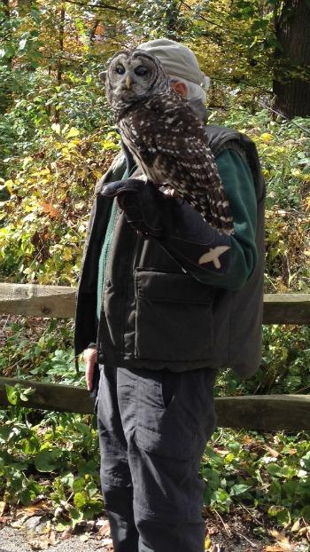 owl-at-willowbrook