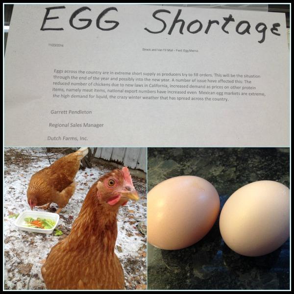 eggshortage