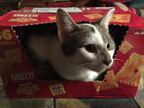 lucy-in-cheezit-box