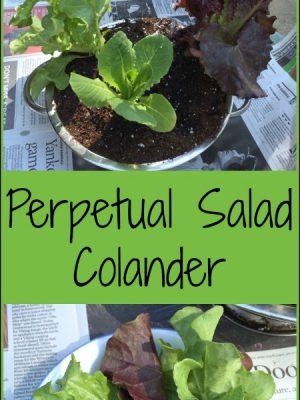 Perpetual Salad Colander — a fun DIY gift idea!