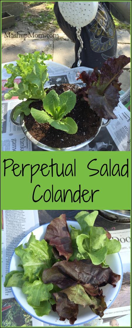perpetual salad colander