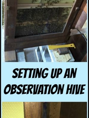Setting Up an Observation Beehive — MashupDad's New Toy!