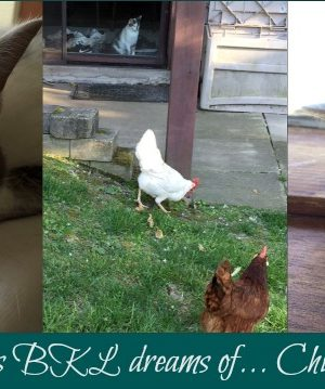 The Notorious BKL Dreams of Chickens… and more notes of summer