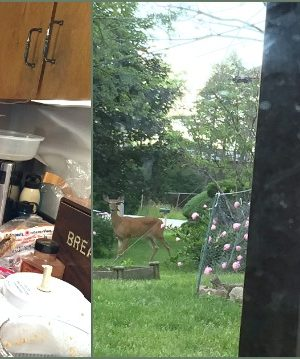 Oh Deer! A week of critters, food, and video games