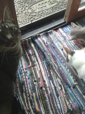 Three Cats at the Door