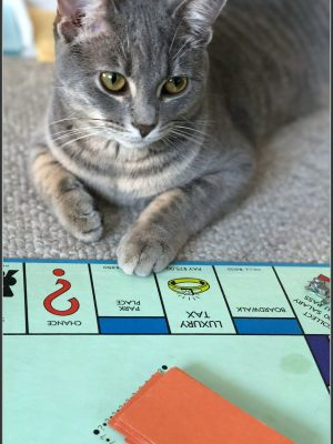Caturday with the Notorious BKL and Friends: The Kitty Games