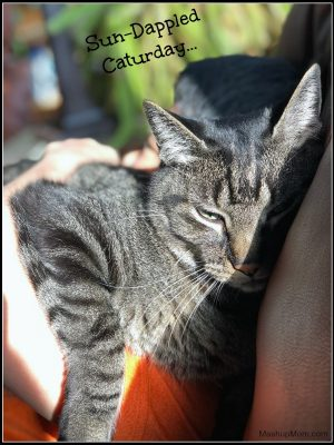 Caturday with the Notorious BKL and Friends: Sun Dappled Edition