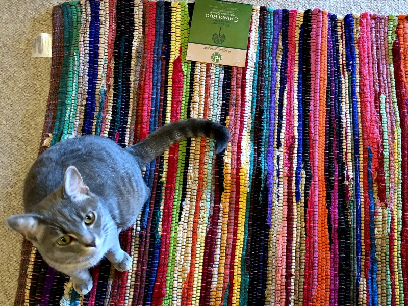 caturday -- cat on colorful rug