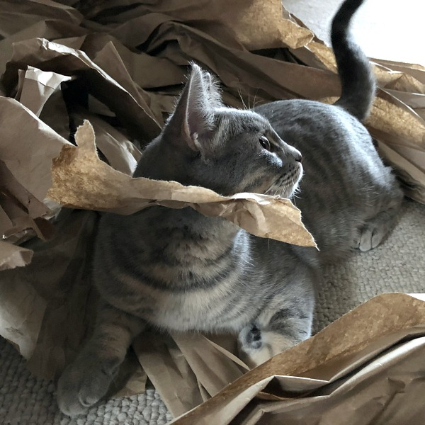 caturday -- cat destroying brown paper