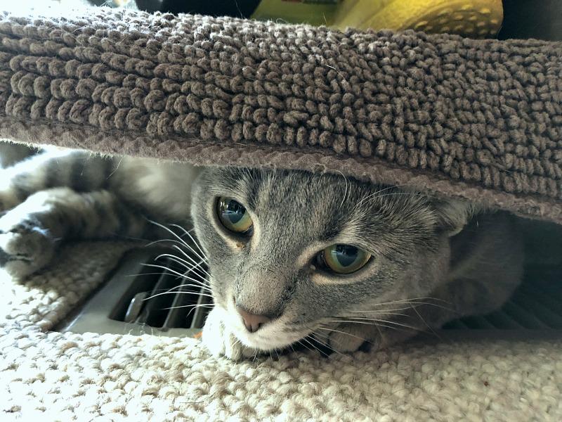 caturday -- cat on heater vent
