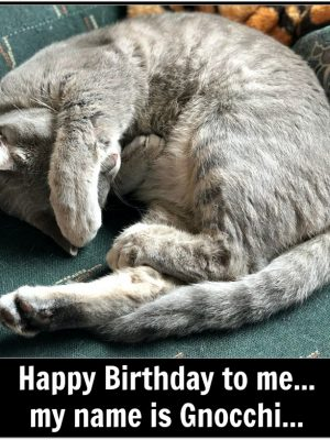 Caturday with the Notorious BKL and Friends: Birthday Edition