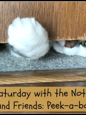 Caturday with the Notorious BKL and Friends: Peek-a-boo Edition