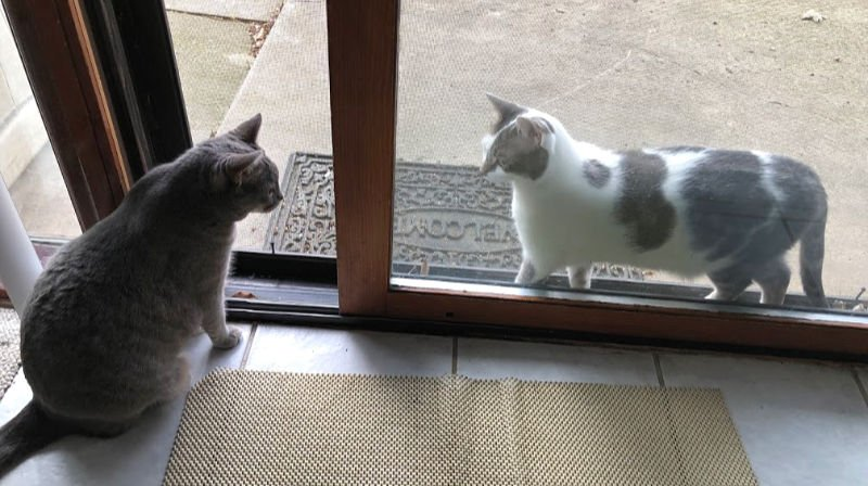 cats in a sliding glass door