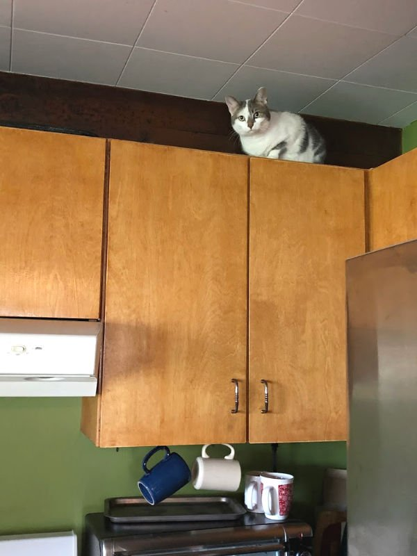 cat on the cupboards
