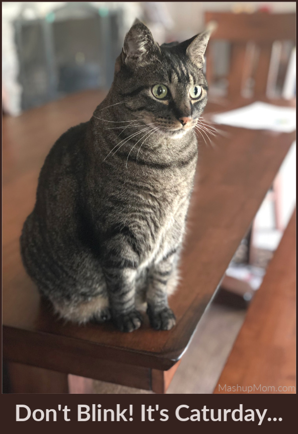 cat on a table staring into space