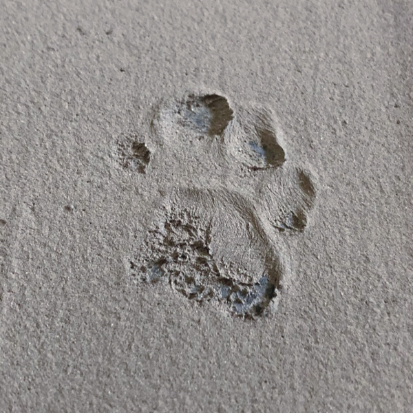 cat paw print in cement