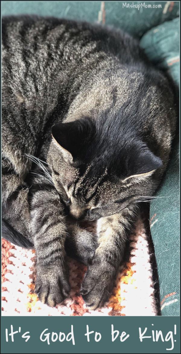sleeping cat on chair