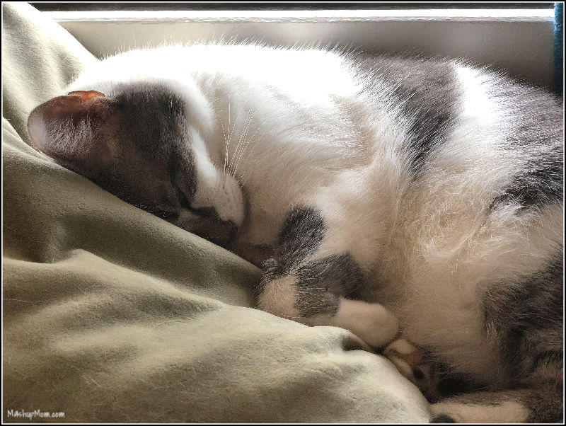 sleeping cat on pillow