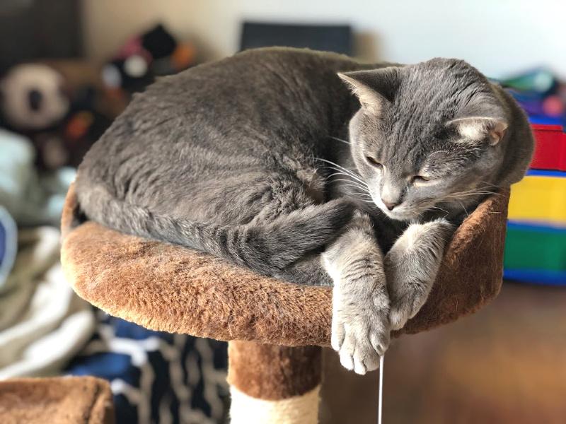 gray cat sleeping on a cat tree