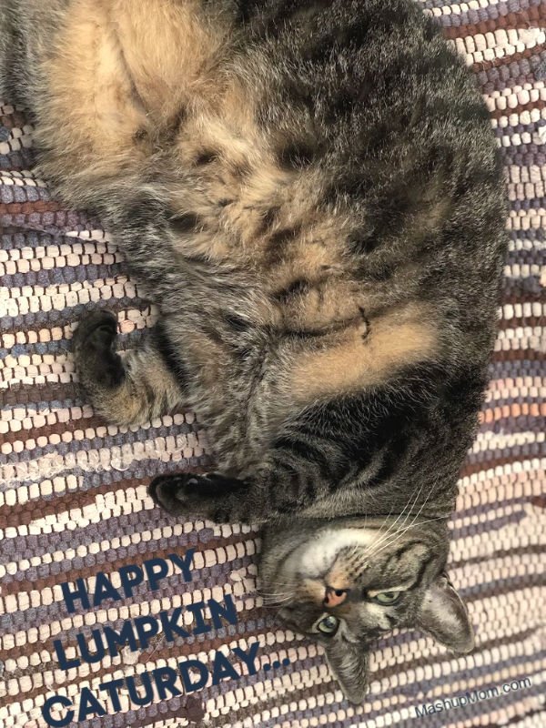 happy lumpkin caturday from brown tabby jeremy