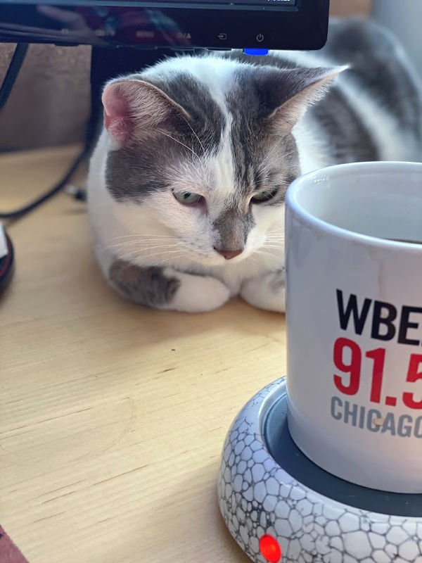 gray and white cat by a WBEZ coffee mug -- BKL admires coffee