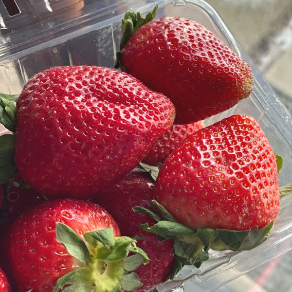 container of big red strawberries