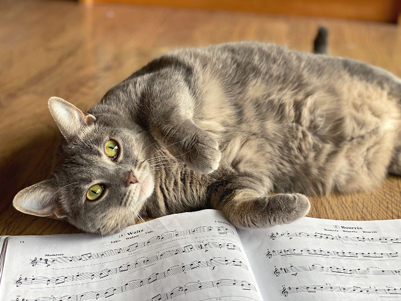 Bad kitty gnocchi with sheet music