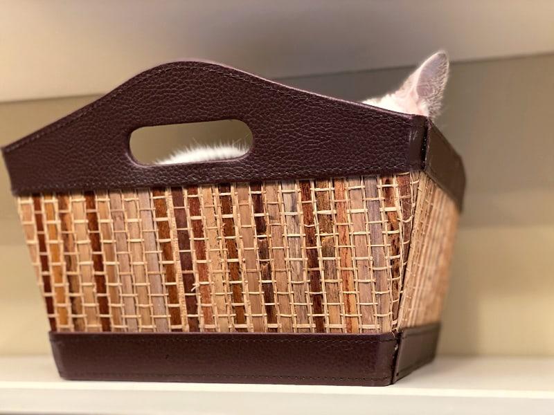 white kitty ear peeking out of a basket