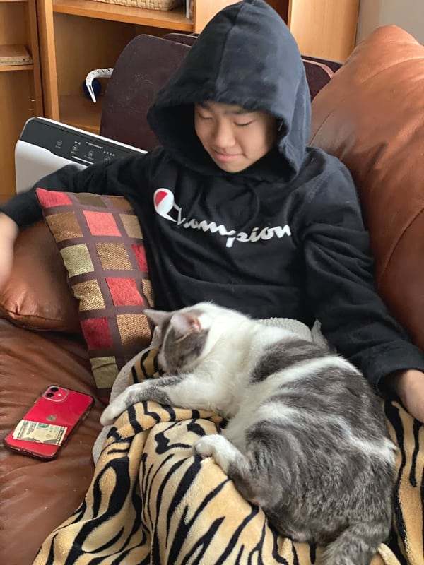 gray and white cat on a blanket covered lap