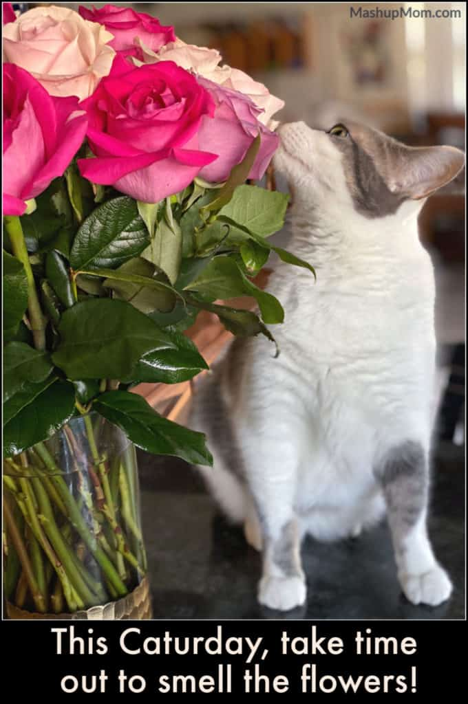 This Caturday: Take time out to smell the flowers, like The Notorious BKL (Bad Kitty Lucy)!