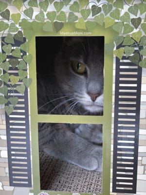 Caturday with the Notorious BKL and Friends: National Pet Day Edition with a new ALDI Cat House.
