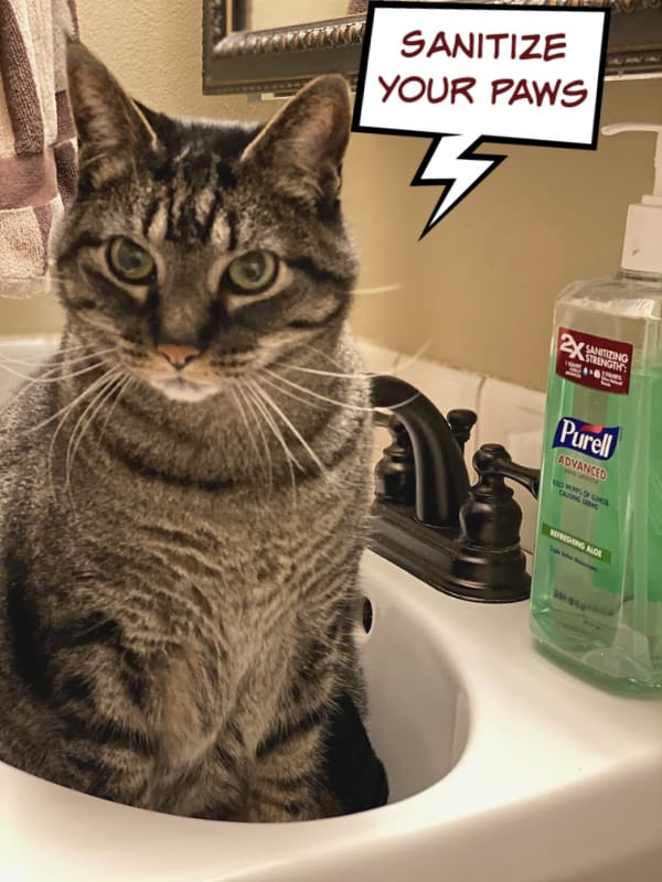 brown cat with purell