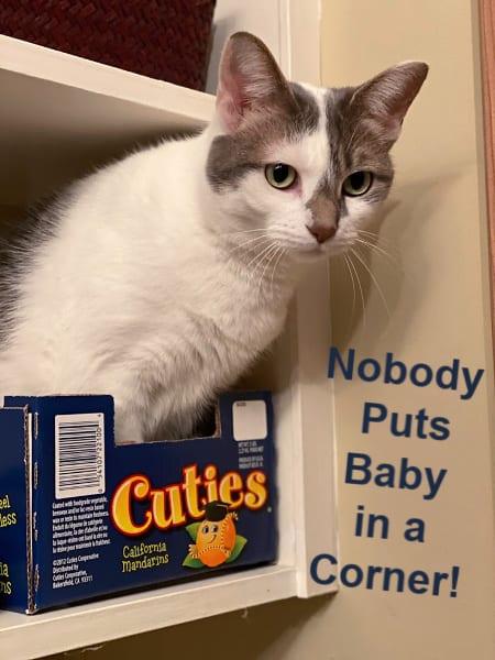 nobody puts baby in a corner cat