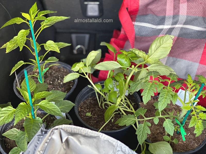 garden plants in this week's ALDI Finds