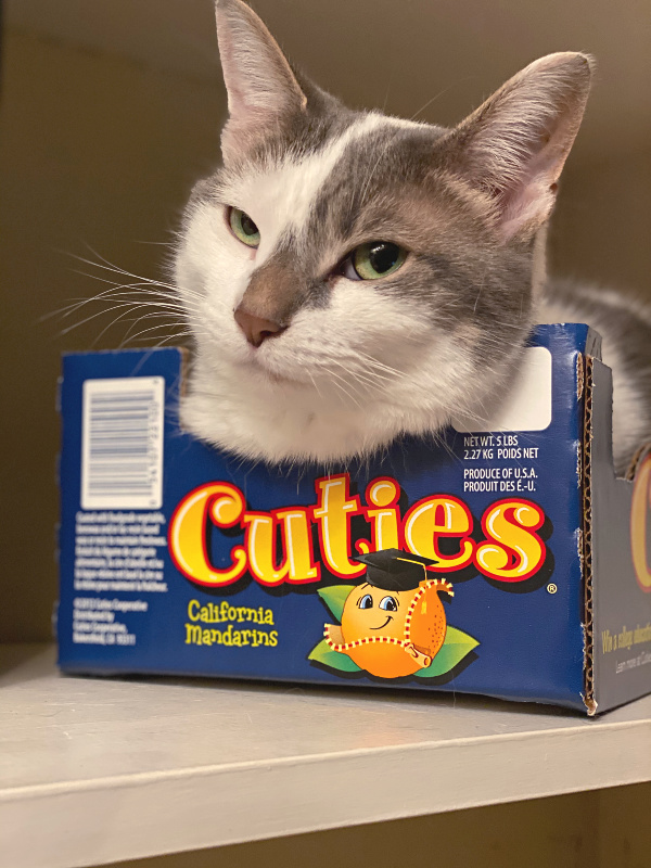 cat in a cuties clementines box