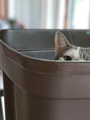 Caturday cat peeking out of a bin