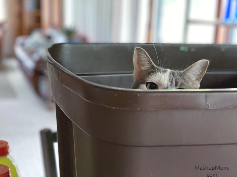 cat peeking out of a bin