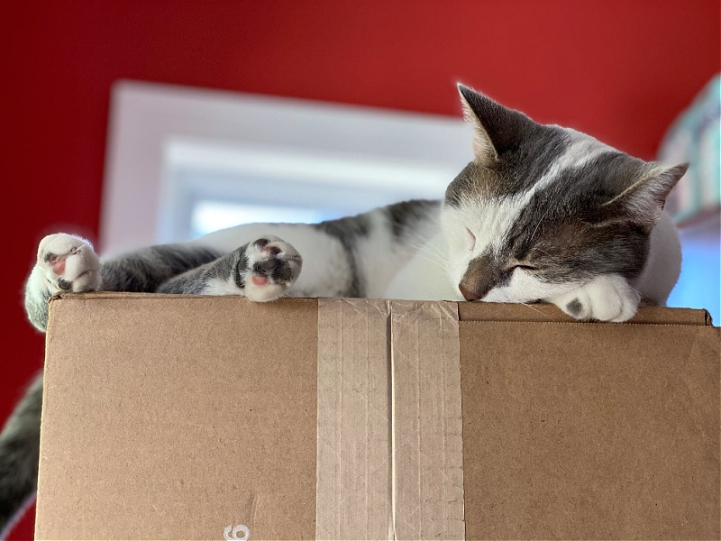 gray and white cat sleeping on a box