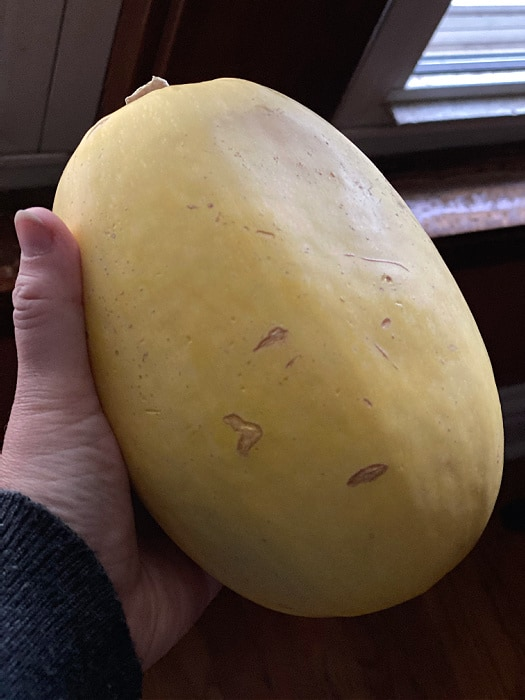 medium spaghetti squash