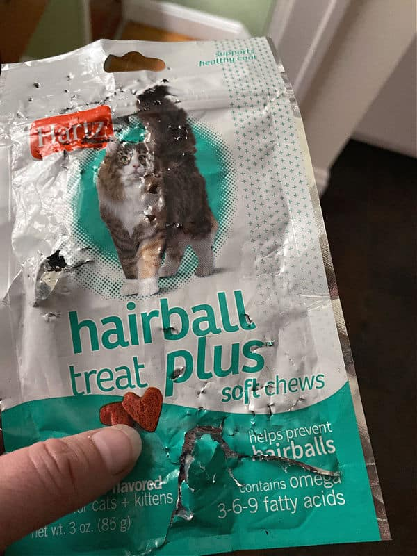 cat chewed cat treats bag