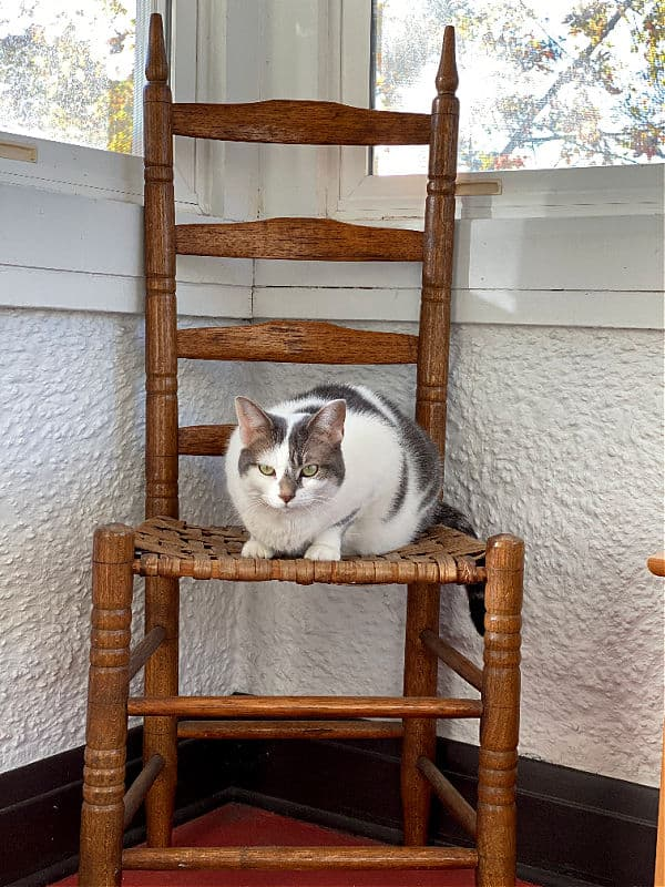 little cat on a big chair