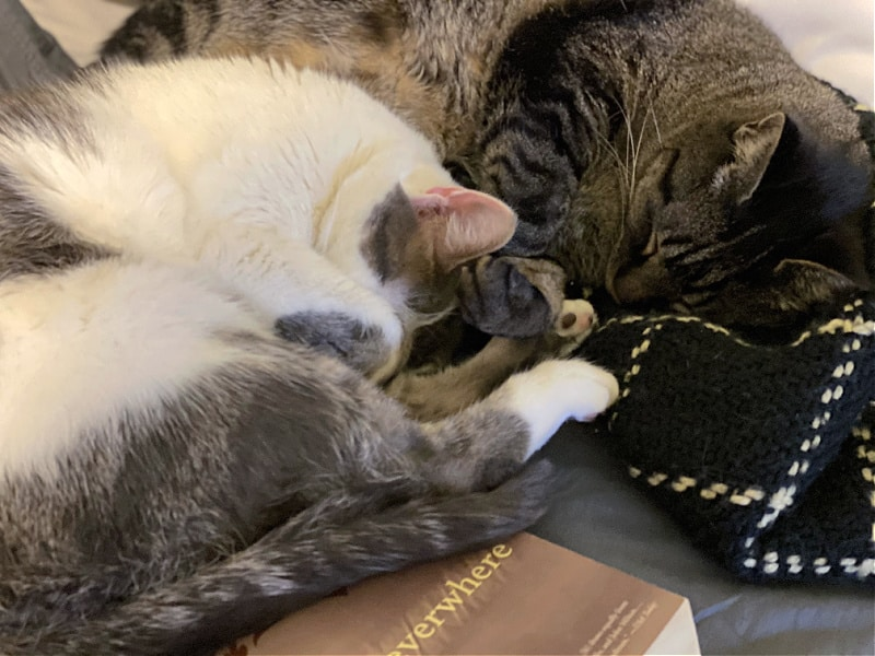 cats curled up napping together