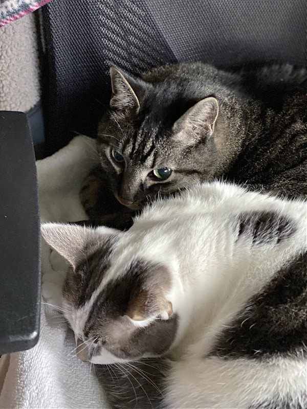 cats curled up together on a chair