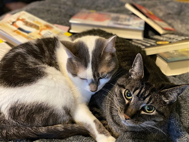 books and cats on a bed