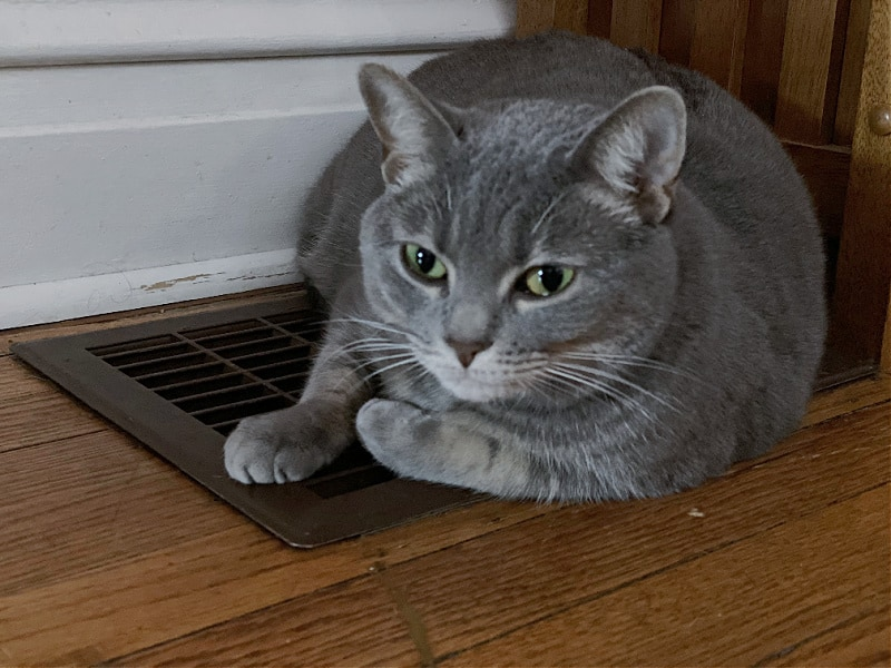 gray cat on a heater vent