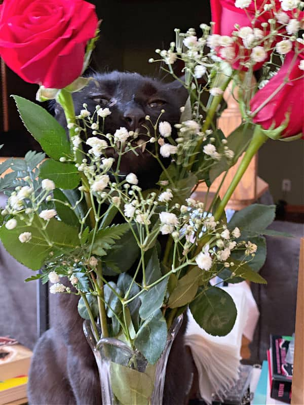 black cat pretending to hide behind roses