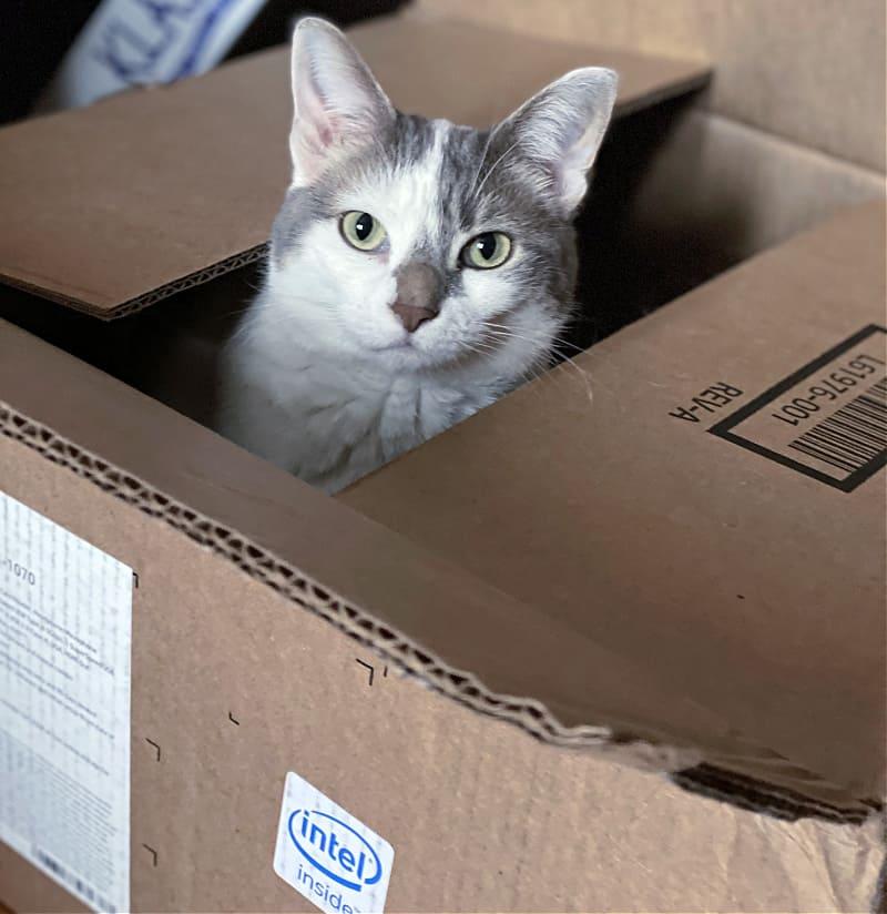 white cat in an intel inside box