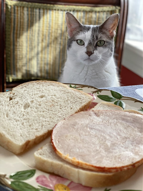 white cat at a table wanting a sandwich