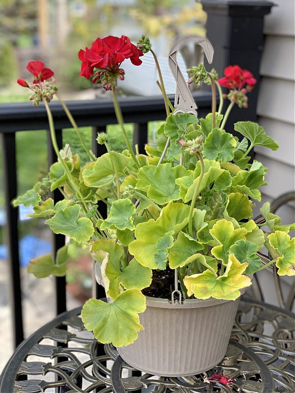 hanging baskets from aldi